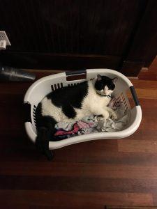 bubba laundry